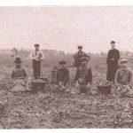 't-Hasselt-aardappelen-verzamelen-ten-voordele-bouw-kerk2